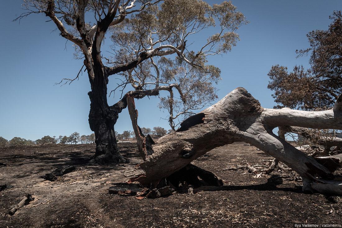 Выжженная земля и трупы животных - фото 62