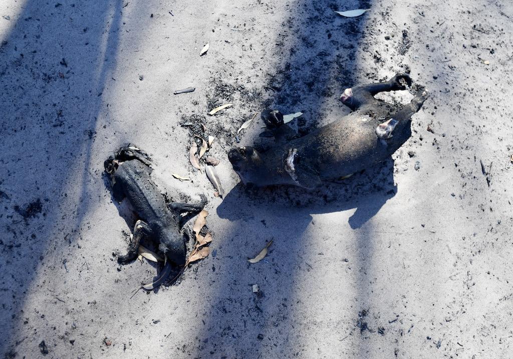 Выжженная земля и трупы животных - фото 38