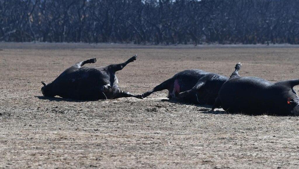 Выжженная земля и трупы животных - фото 39