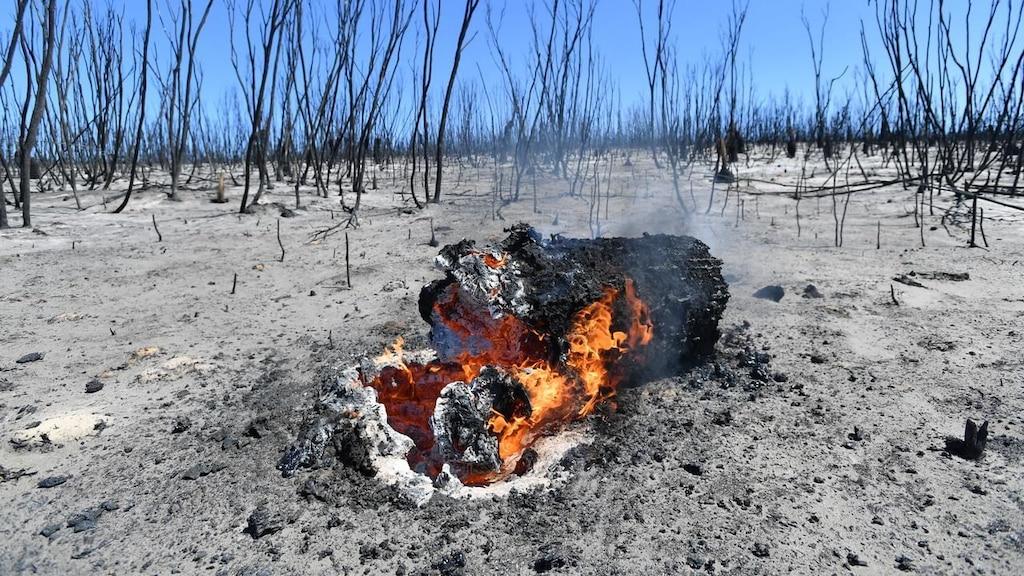 Выжженная земля и трупы животных - фото 53