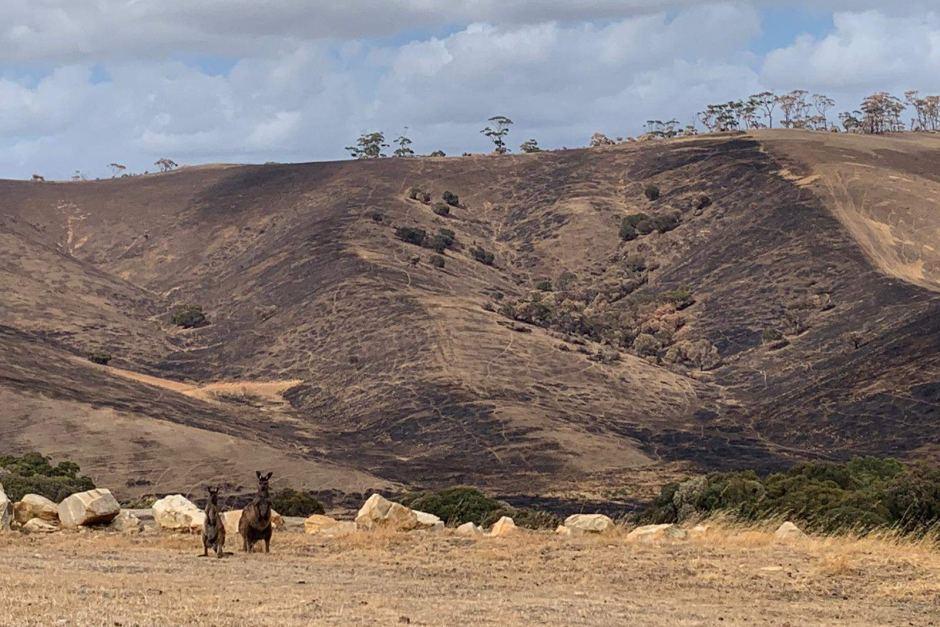 Выжженная земля и трупы животных - фото 58
