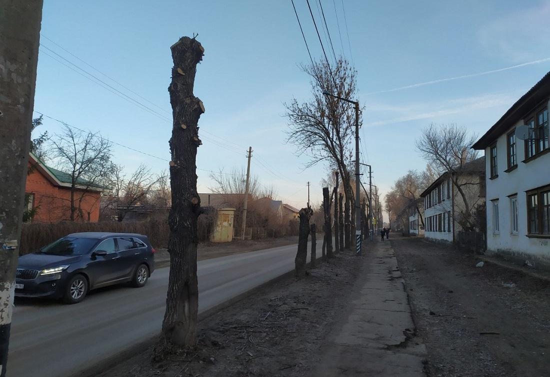 Весенняя обрезка деревьев изуродовала еще один город
