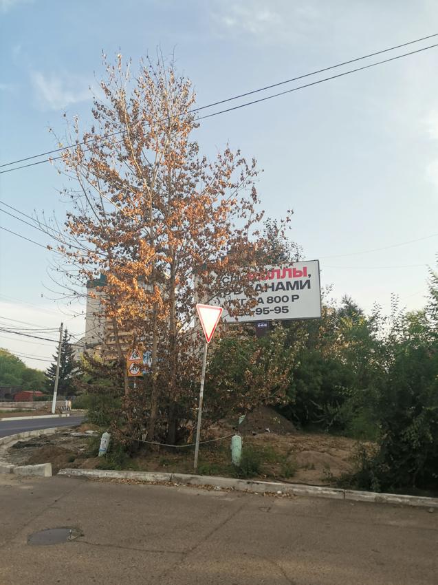 Массовое убийство в Чите во имя рекламы