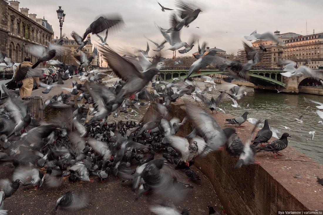 Париж: мигранты, многоэтажки и новое благоустройство