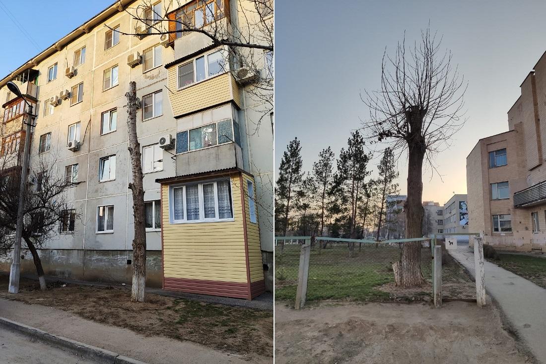 Оказывается, массовая обрезка деревьев украшает город