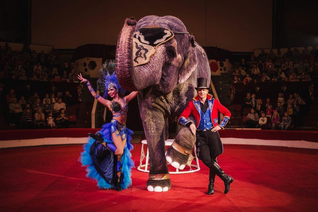 Цирк с животными – это грёбаное средневековье