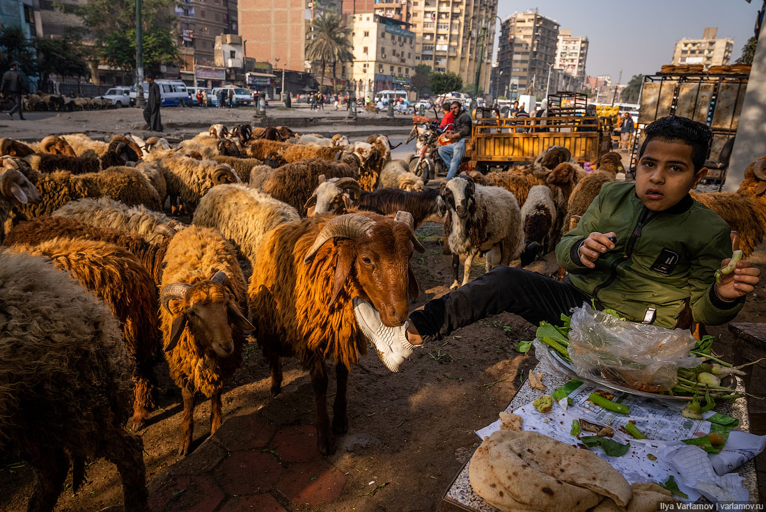 Каир: бараны, стаканы и эстакады