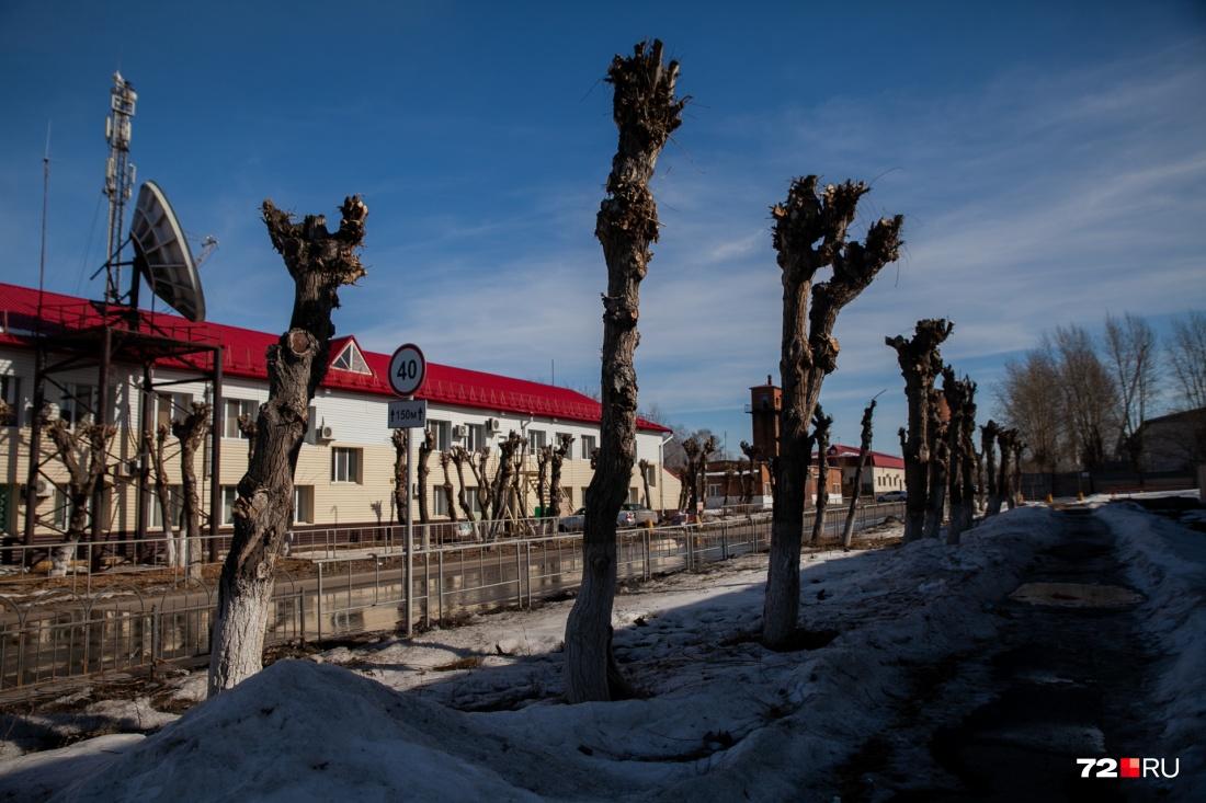 Тюмень – город больших пеньков