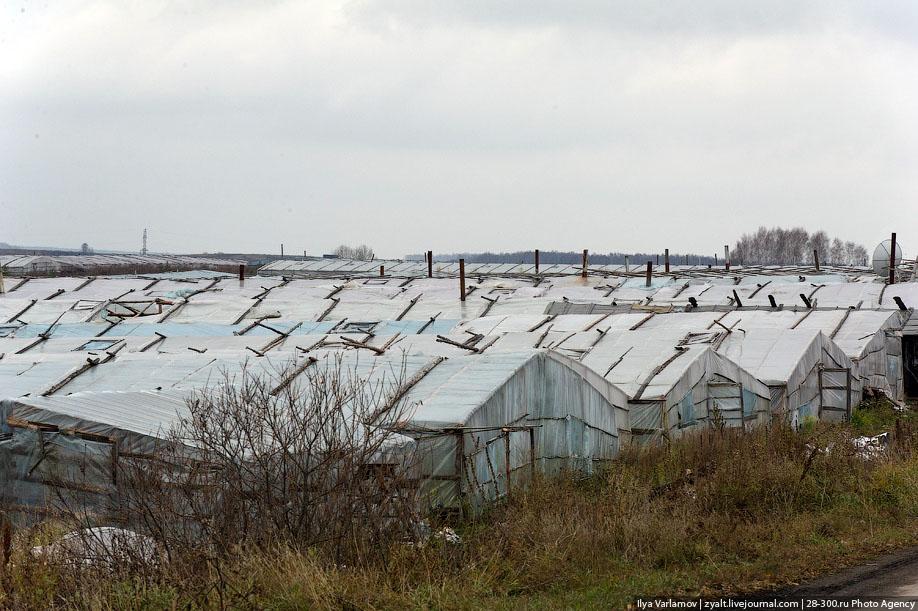Поля китайских теплиц в пригородах Челябинска