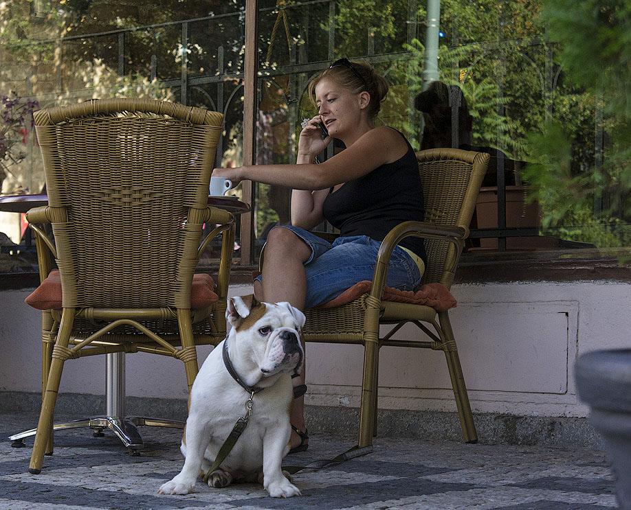 Где разрешен выгул собак в дачном и ульянке