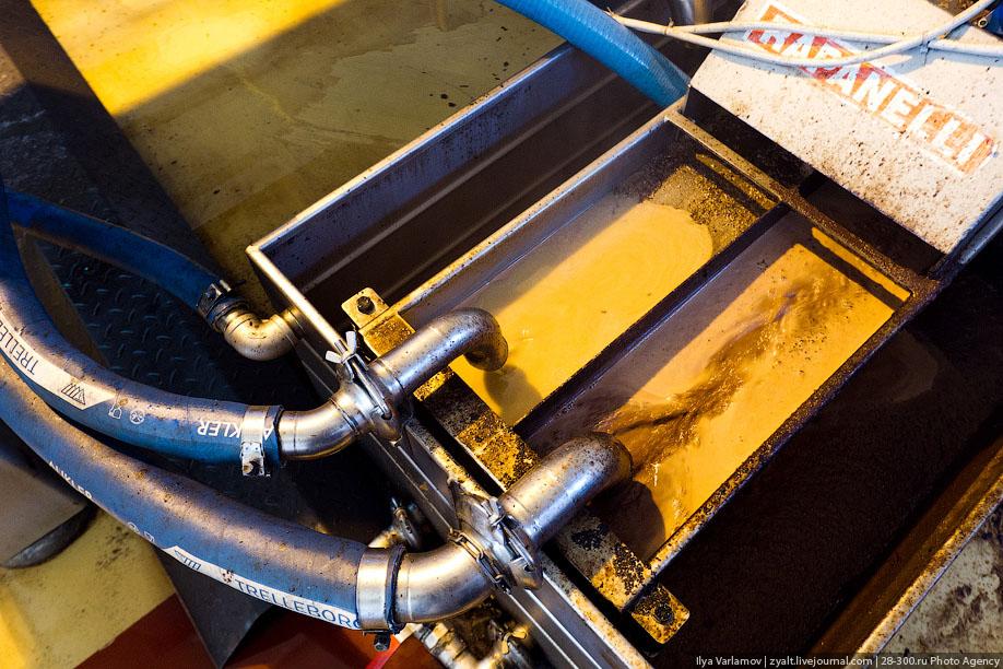 Как производят оливковое масло в Иордании