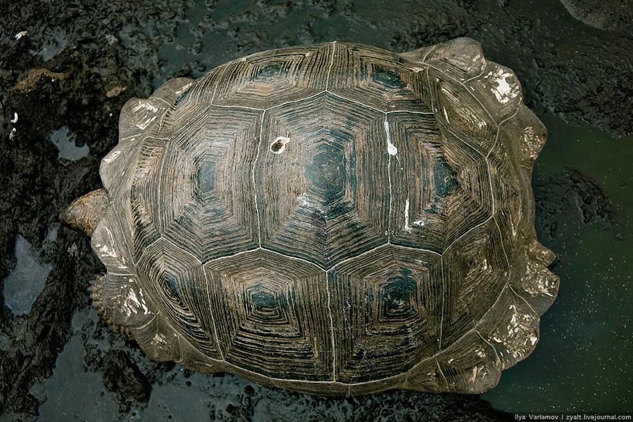 Сколько живут галапагосские черепахи